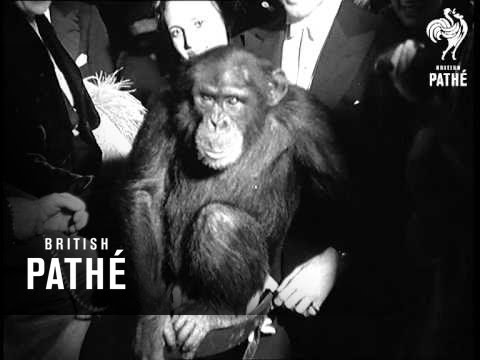 London Zoo Ball (1937)