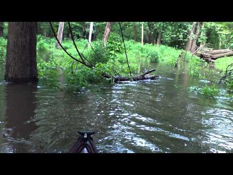 liver on the river (sans souci island)