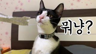 고양이 껌이 낯선사람을 만나다! 고양이 브이로그❤VLO…