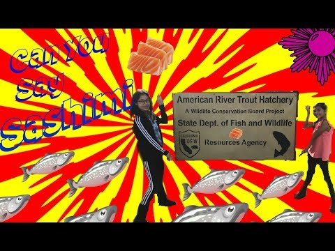 Our Trip To The Fish Hatchery Where We Got To Watch Salmon (AKA Sashimi) Climb The Fish Latter