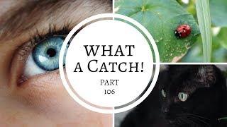 What a Catch! - Part 106 (A Miraculous Ladybug Fanfiction)