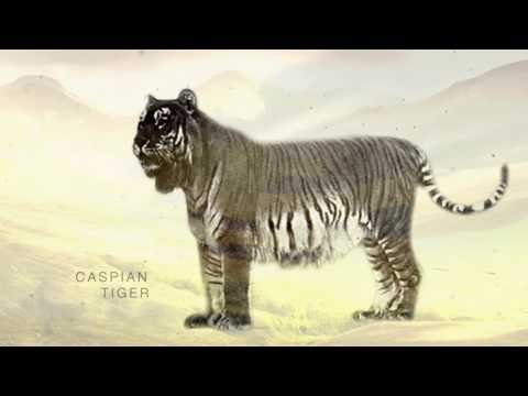Wildlife Obituaries - Caspian Tiger
