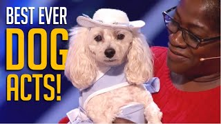 12 Best Dog Acts Of ALL TIME on America's Got Talent and Britain's Got Talent