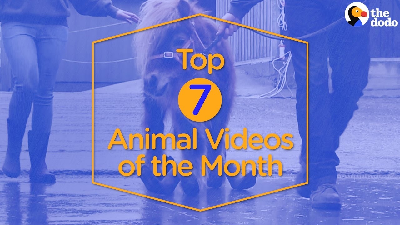 7 Viral Animal Videos Of April...#1 Will Break Your Heart | The Dodo