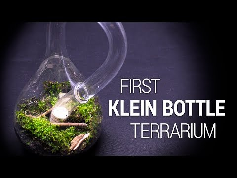 The First KLEIN BOTTLE Terrarium