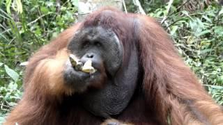 Indonesian Borneo