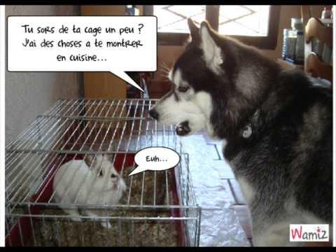 Humour De Chiens Et Chats Par Mimie 2159 Youtube