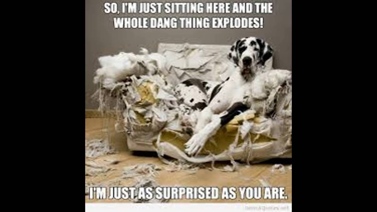 Awesome Funny Dog Quotes