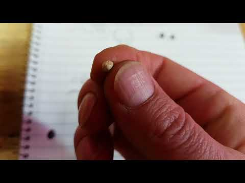 TwizTD TiPZ How To Determine Female From Male Seeds