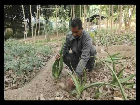 2 साल एक पड़ताल - वाह किसान | Wah Kisan - Success Story - 6 (Spot)