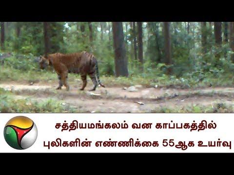 சத்தியமங்கலம் வன காப்பகத்தில் புலிகளின் எண்ணிக்கை 55ஆக உயர்வு   Tiger Reserve Sathyamangalam