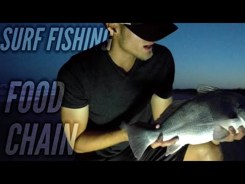The Surf Fishing Food Chain