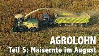 Lohnunternehmen Agrolohn: Maisernte im August