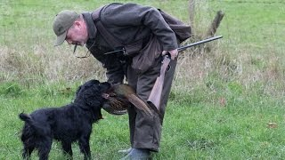 Walked Up Rough Shooting for Pheasants with Spaniels