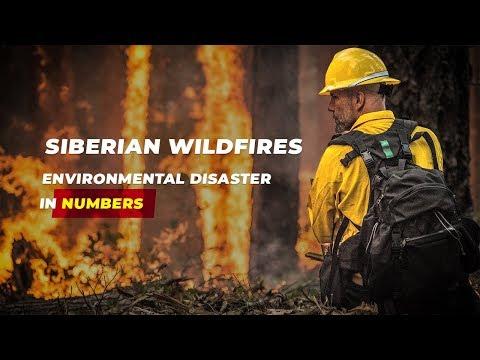 Siberian wildfires: environmental disaster in numbers