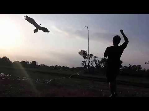Layangan burung
