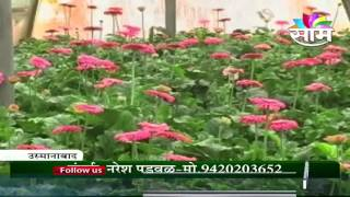 Zerbara green house farming floriculture in Osmanabad