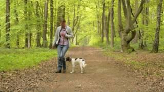 Basisausbildung für den brauchbaren Jagdhund: