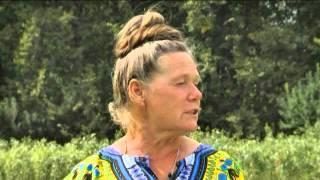 Смотреть видео цветная капуста почернела