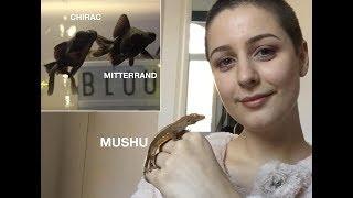 Gambar cover Bienvenue sur ma chaîne, découvrez mes animaux !