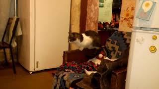 Коты дерутся, видео прикол
