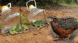 Awesome Quick Bird Trap Using Big Bottle - How To Make The Bottle Bird Trap Work 100%