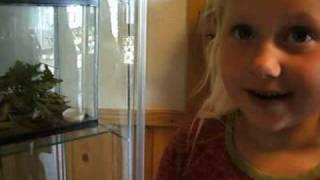 Edderkopp i Torpeløkka Barnehage i Helgeroa