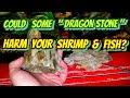 "Shrimp Keeper Warning! Some ""Dragon Stone"" is not Ohko & Can Harm Shrimp or Fish via TDS & PH"