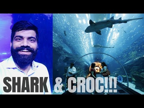 Dubai Aquarium - SHARKS 🦈  - CROC 🐊  - Underwater Zoo!!