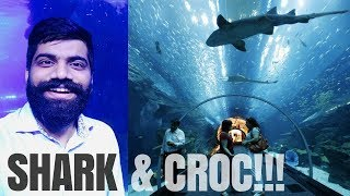 Dubai Aquarium - SHARKS 🦈  - CROC �  - Underwater Zoo!!