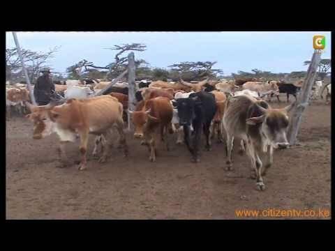 Cattle rustling way forward