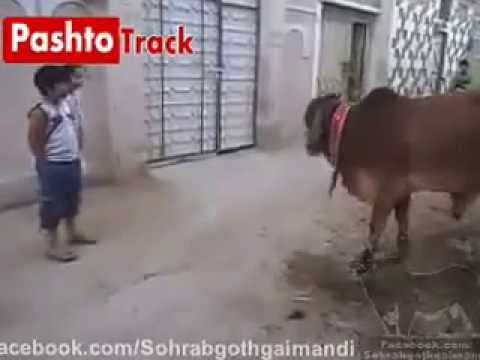 Pakistani Kids Funny Clip