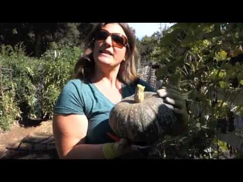 When and How to Harvest Winter Squash | Renee's Garden Seeds