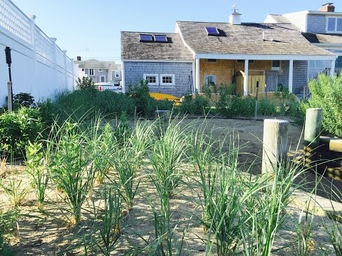 Dune Grass Project