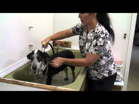 How to bathe your dog properly - Animal Ark Pet Grooming