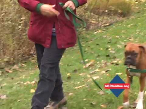 Gentle Leader Easy Walk Harness Fit and Use - YouTube