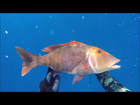 2016 spearfishing adventures