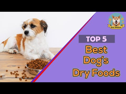 ✅-top-10-best-dog's-dry-foods-  -popular-dog-dry-food-in-the-world