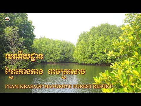 Mangrove Forest Resort – Angkor Wat Tours – Tours of Cambodia – Phnom Penh Travel