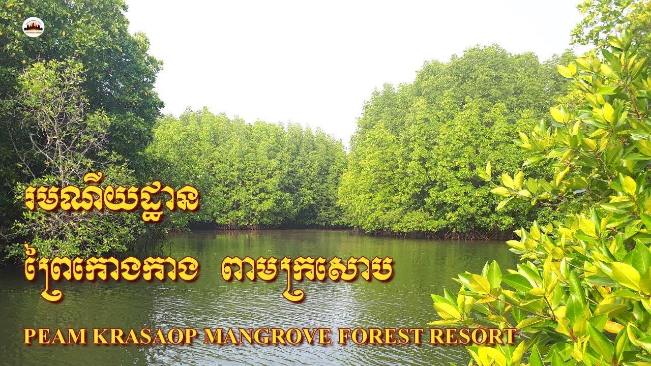 Mangrove Forest Resort – Angkor Wat Tours – Tours of Cambodia – Phnom Penh Travel