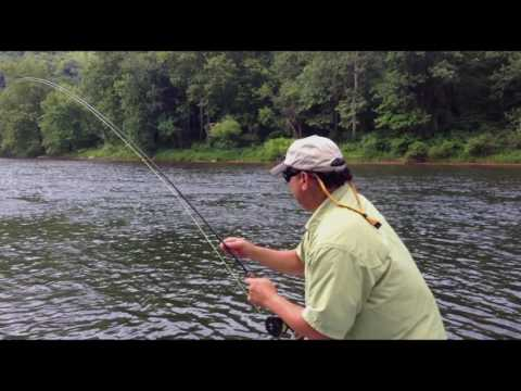 Wildside Adventures Travel Service - Youghiogheny River PA Giant Brown Trout
