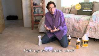 Remove Dog Urine Stains and Odors