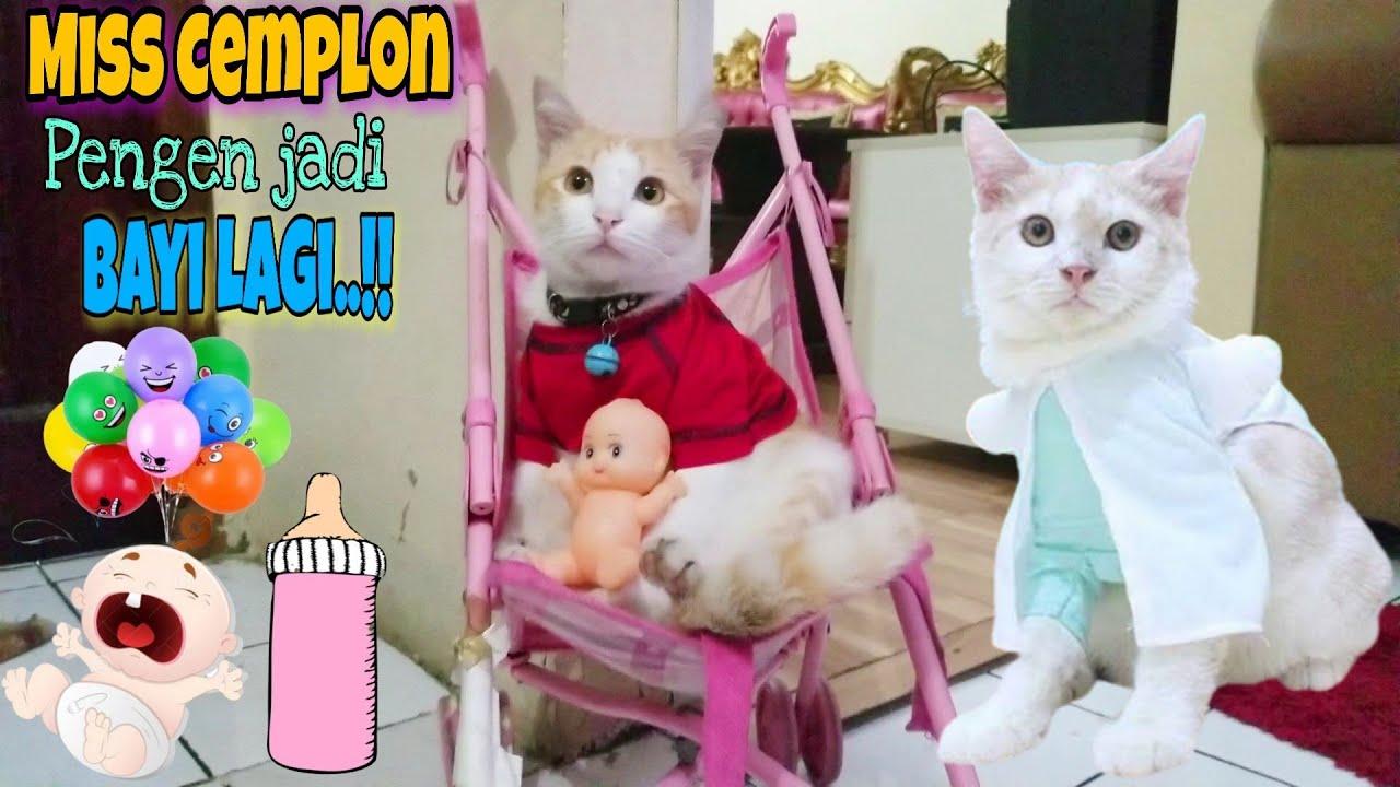 Miss Cemplon ♥️ Kucing Lucu Marco Ingin Jadi Anak (Bayi) Kucing Lagi Haha...😹 Lucunya Kucing Hanum
