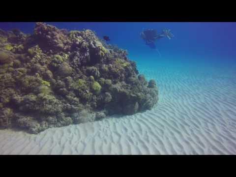 Diving in Guantanamo Bay Cuba