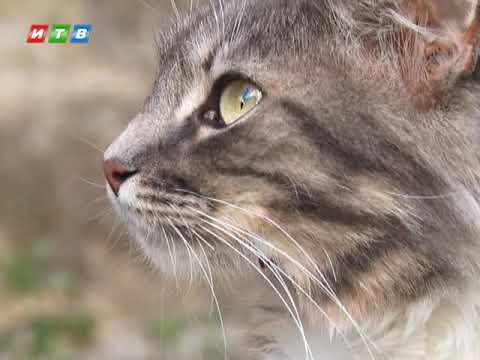 ТРК ИТВ: Теперь животных можно усыпить только после заключения ветеринара