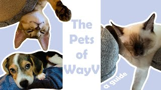 The Pets of WayV (a guide)