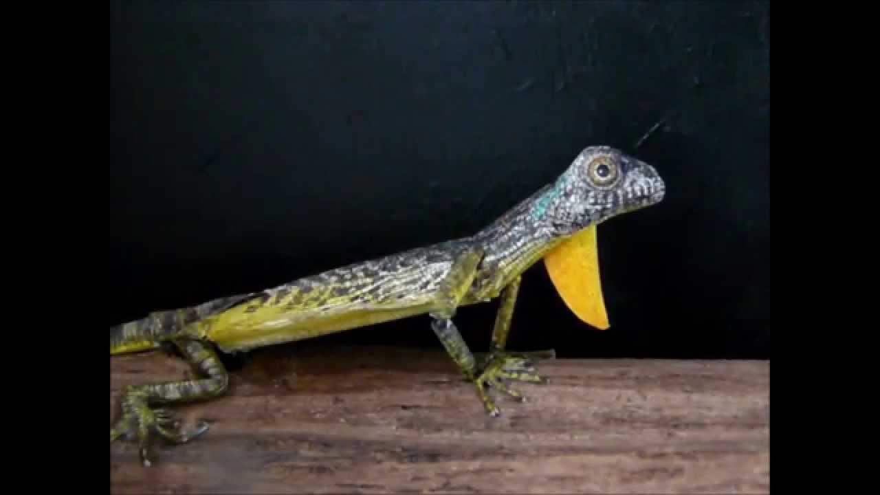 Free 3d Dinosaur Wallpaper Little Lizard A Moving Papercraft Youtube