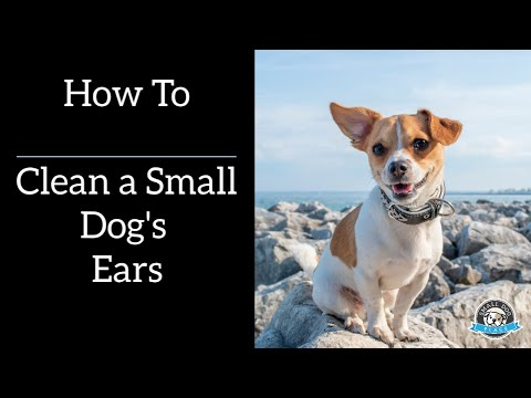 How to Clean a Small Dog's Ears