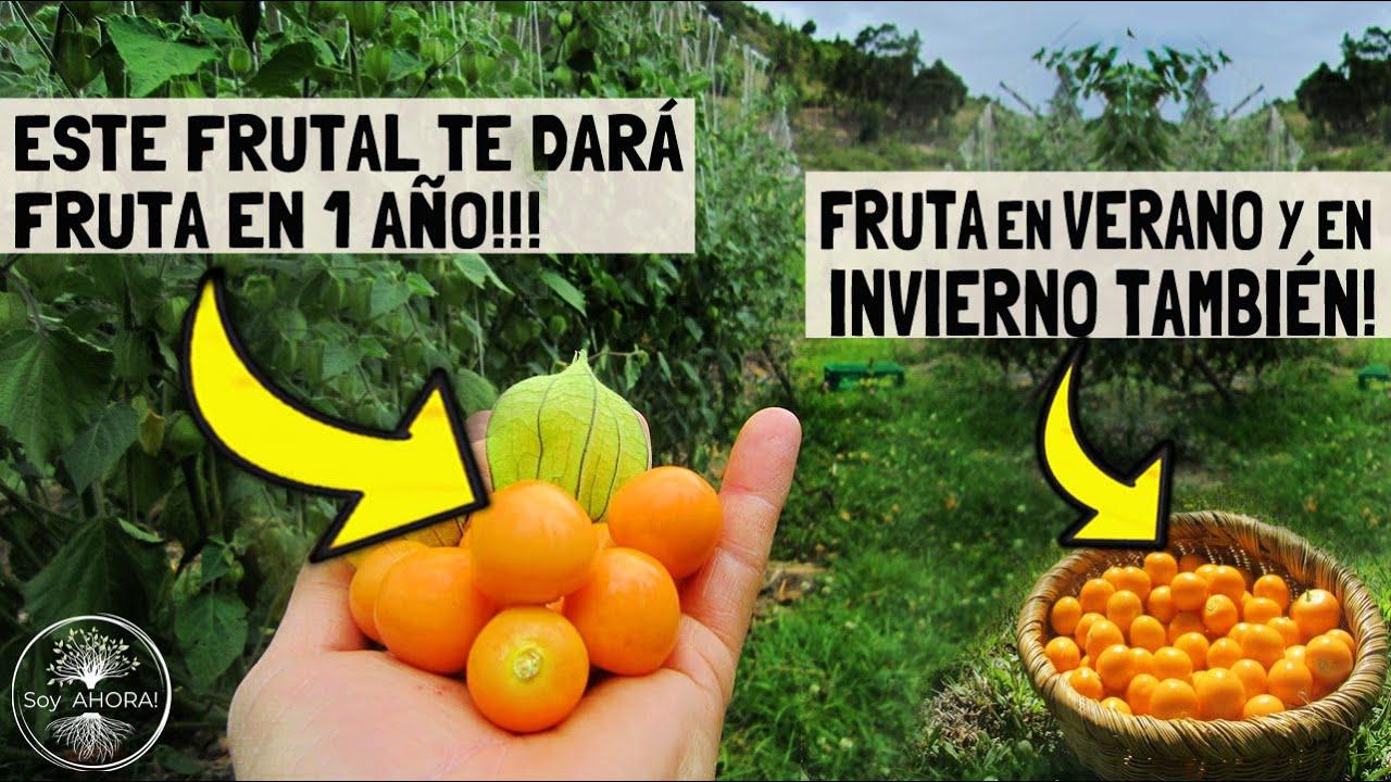 TE DARÁ FRUTA EN 1 SOLO AÑO!!! 😱 y al 2do. año TRIPLICA su CANTIDAD!! Superalimento Nativo!
