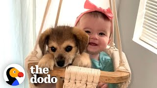 This Puppy And Baby Sister Are Perfectly In Sync With Everything They Do | The Dodo Soulmates
